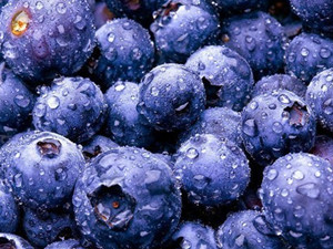 蓝莓的功效与作用 哪几类人群吃蓝莓最好