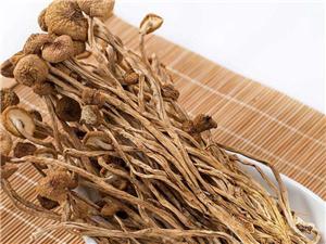 茶树菇的功效与作用及禁忌有哪些 关键点整理出来一目了然