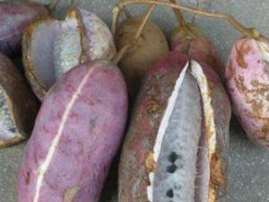 八月瓜怎么吃 不同的吃法有不同的功效要get起来